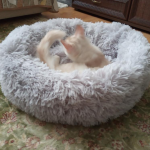Fluffy Cat Bed photo review